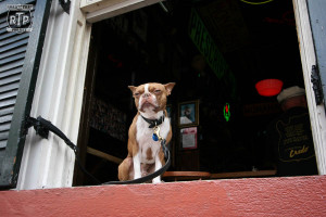 This little guy looks a little bit like a gargoyle watching over his bar in the French Quarter.